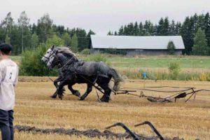 Kilpailun ulkopuolella harjoitushevosina mukana olleet percheron-hevoset Bocas ja Parooni pillastuivat juuri kun kisa oli alkamassa, mutta selvittiin säikähdyksellä, hevoset saatiin kiinni, ennen kuin vahinkoa ehti syntyä 2017 (MS)