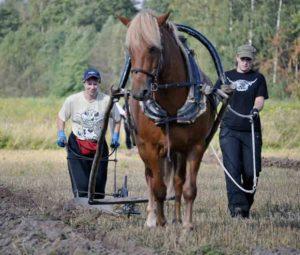Kolmanneksi yksikösarjassa tuli Hallanvaara, kyntämässä Raili Mäki-Jaakkola, ohjissa Maria Lehtonen 2014 (TN)