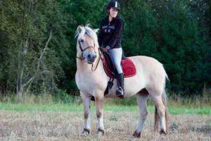 2010 kisoissa esiteltiin myös erilaisia hevosrotuja, tässä Norjanvuonohevonen Hilde