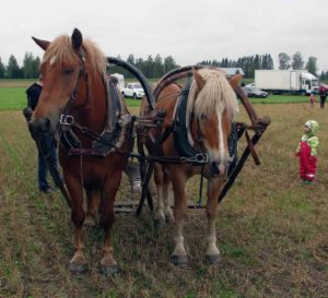 Onpa suuria hevosia, pikkutyttö tuumaa 2018