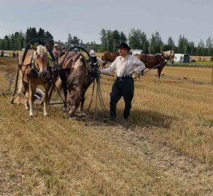 Taavetin-Taava ja Hovingatar ja hevosten omistaja Jari Kupiainen 2019